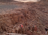 Meditation walking retreat Sinai desert